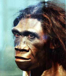 Rekonstruktion eines weiblichen Homo-erectus-Kopfes.